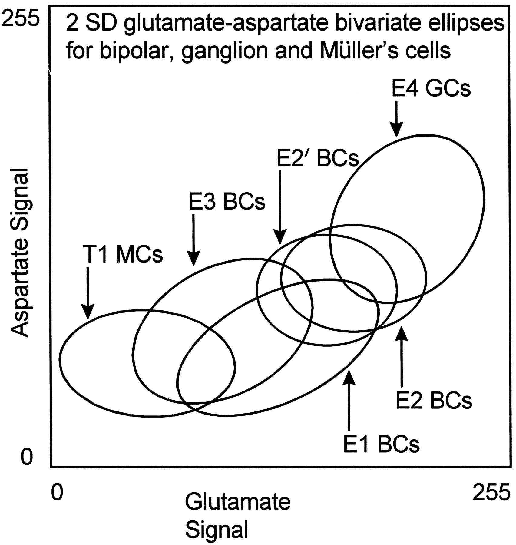 1704x1800 Amino Acid Signatures In The Primate Retina Journal Of Neuroscience