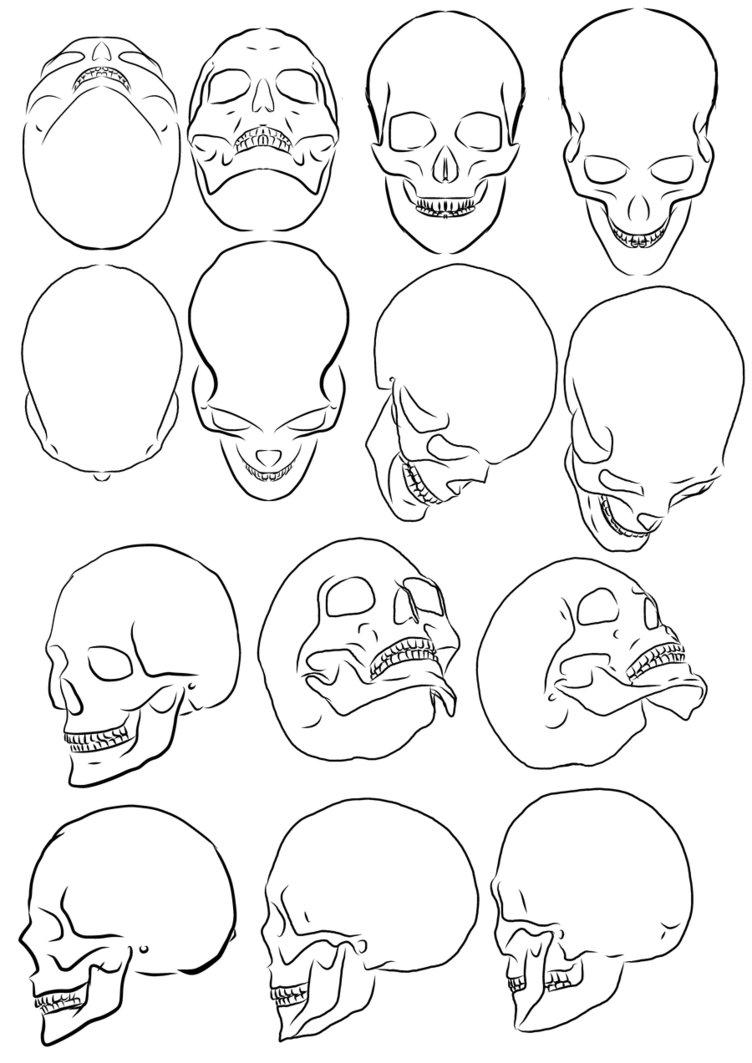 752x1063 Skull Study By Pharion