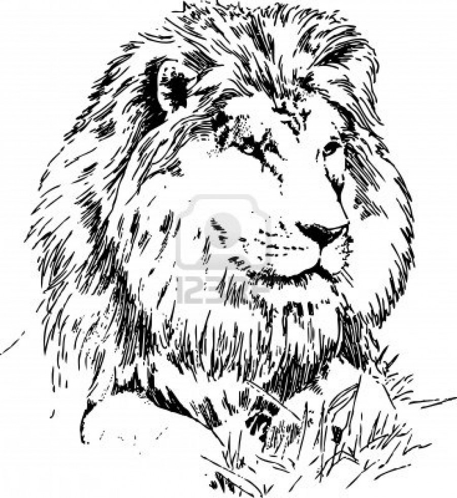 900x980 Lion Lying On Grass Hand Drawing Black On White