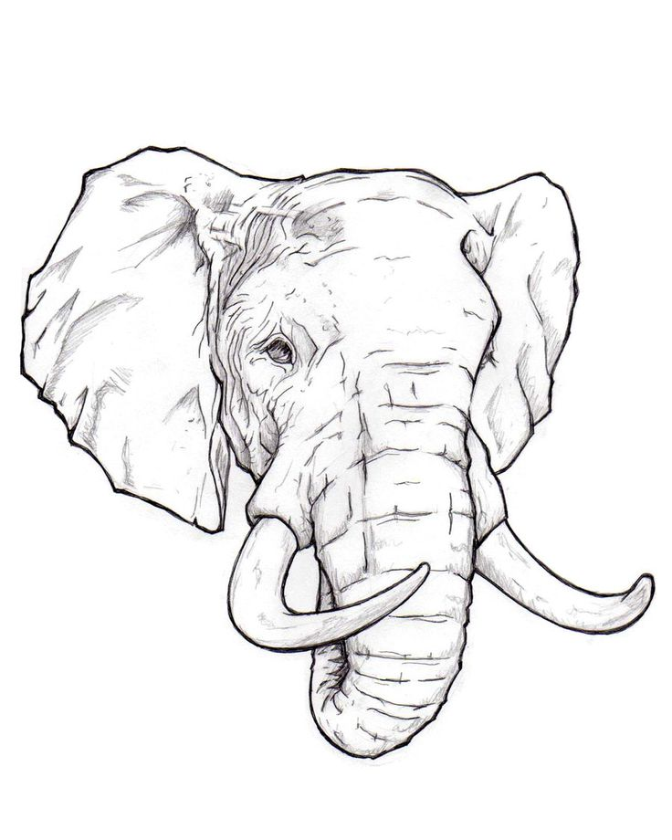 736x920 Elephant Head Outline Best 25 Elephant Head Drawing Ideas