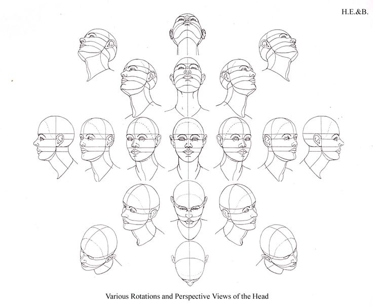 Drawing head diagram wiring diagram face positions drawing at getdrawings com free for personal use rh getdrawings com drawing faces diagram person drawing ccuart Gallery