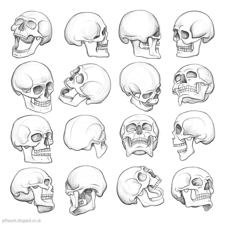 1500x1500 Jeff Searle The Human Skull