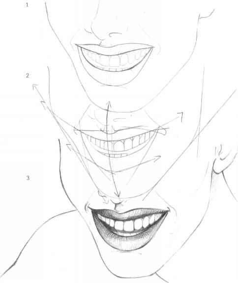 484x575 The Mouth Analysis And Structure