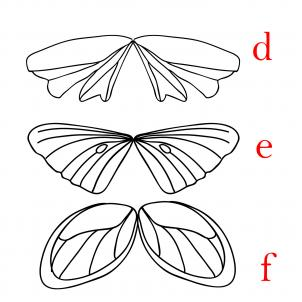 302x302 How To Draw Fairy Wings Step 18 Drawing Fairy