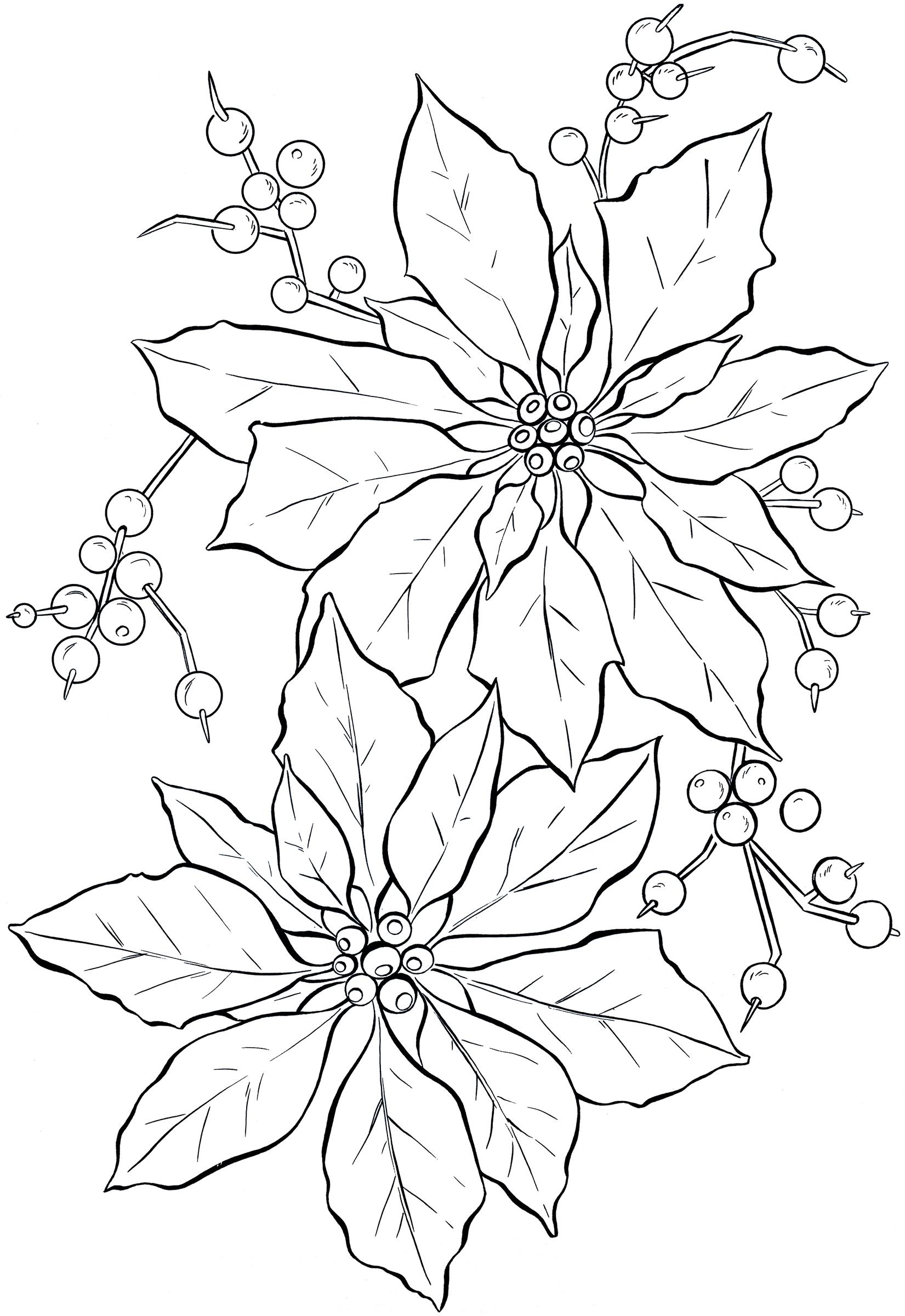 1651x2400 Poinsettia Line Art
