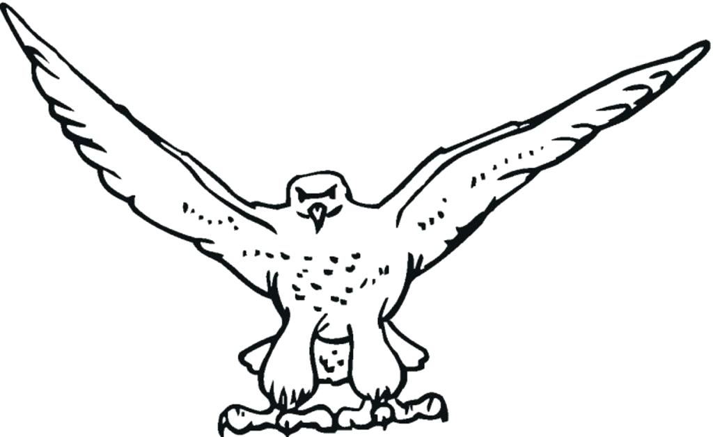 1024x628 Falcon Animal Coloring Pages Free Falcon Bird Coloring Pages