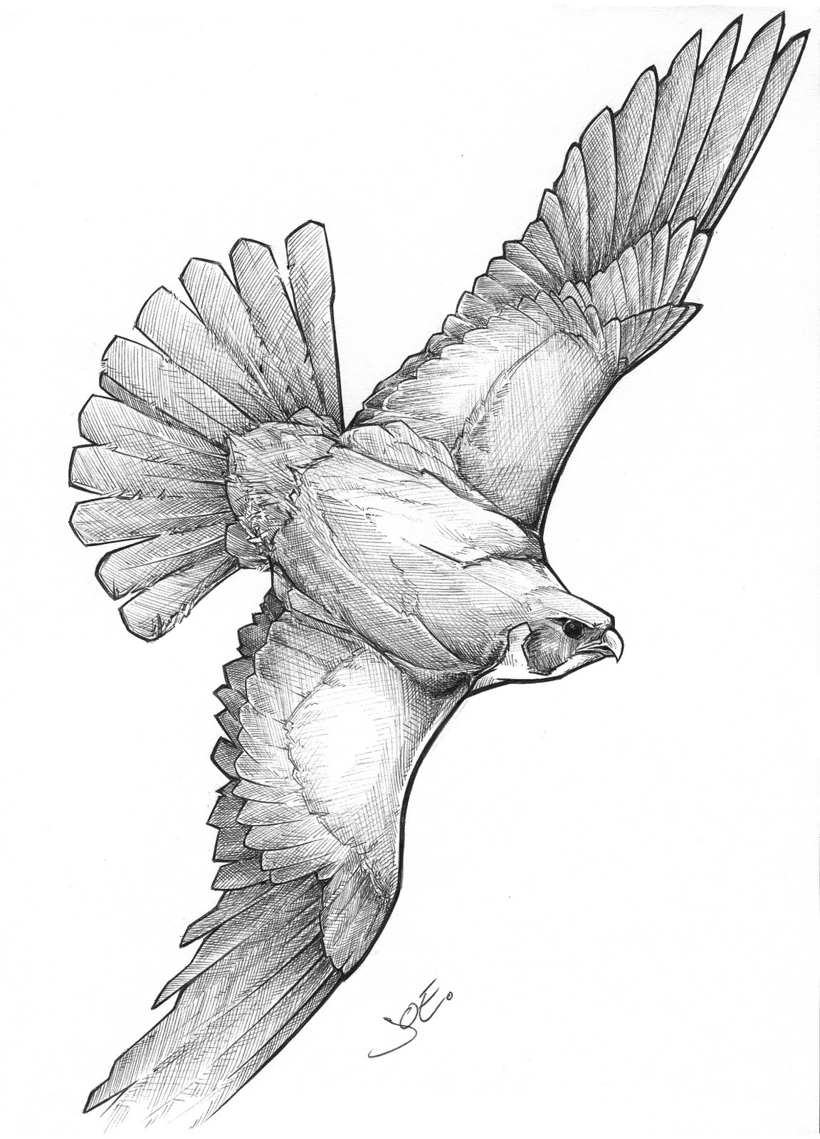 1152x1600 Fluid Mind Productions Falcon In Flight Finished Rendering