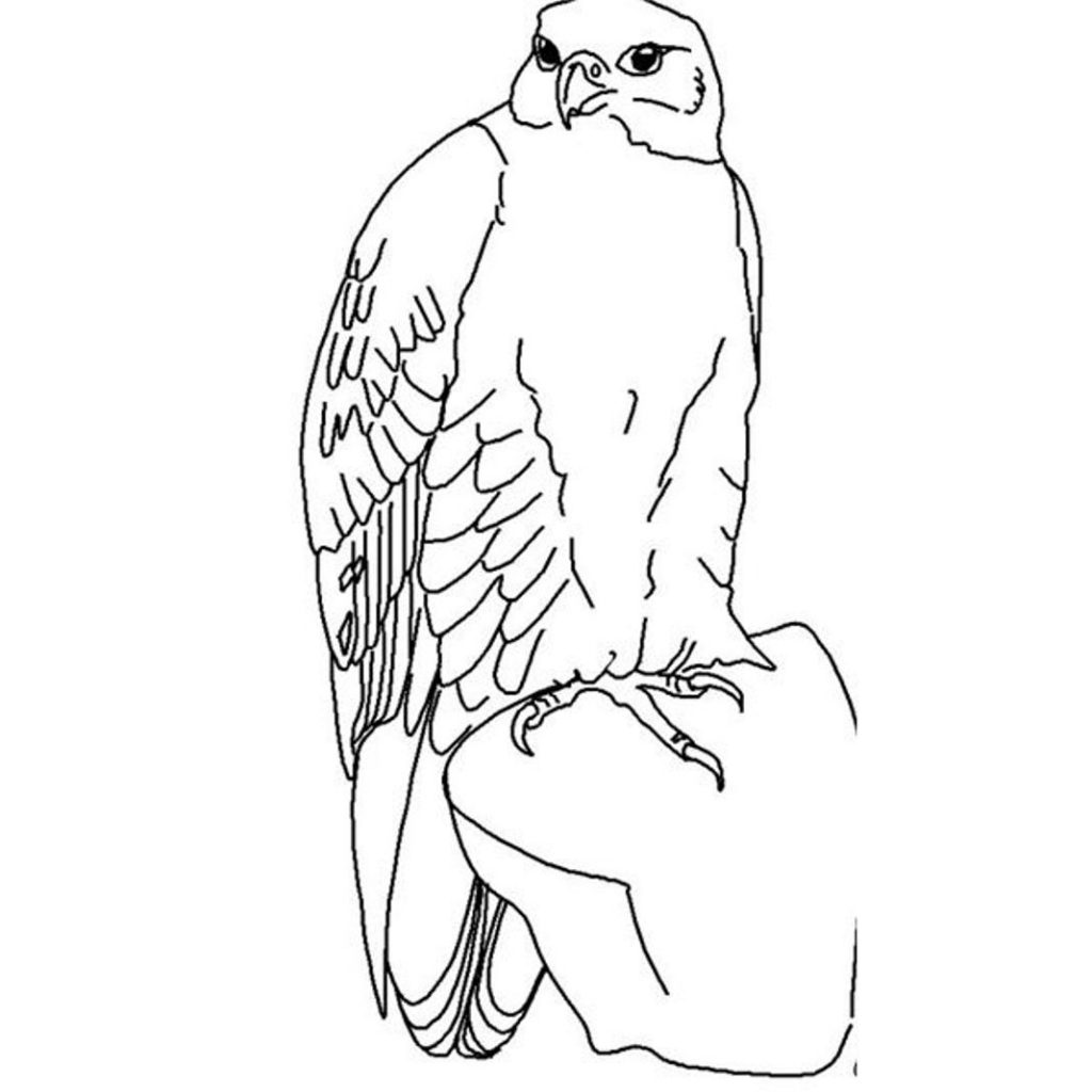 1024x1024 Hawk Amp Falcon Coloring Pages For Kids