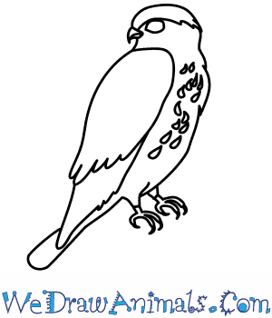 300x350 How To Draw A Merlin