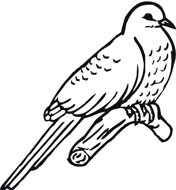 600x646 Bird Coloring Pages Amazing Animal Peregrine Falcon Bird Coloring