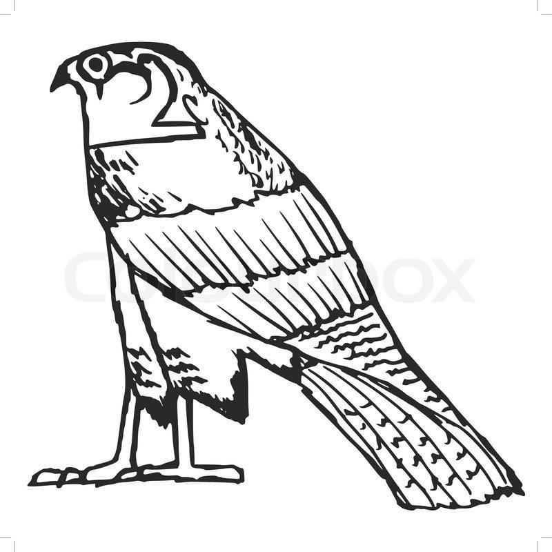 800x800 Sketch Illustration Of Falcon, Ancient Egyptian Symbol Stock