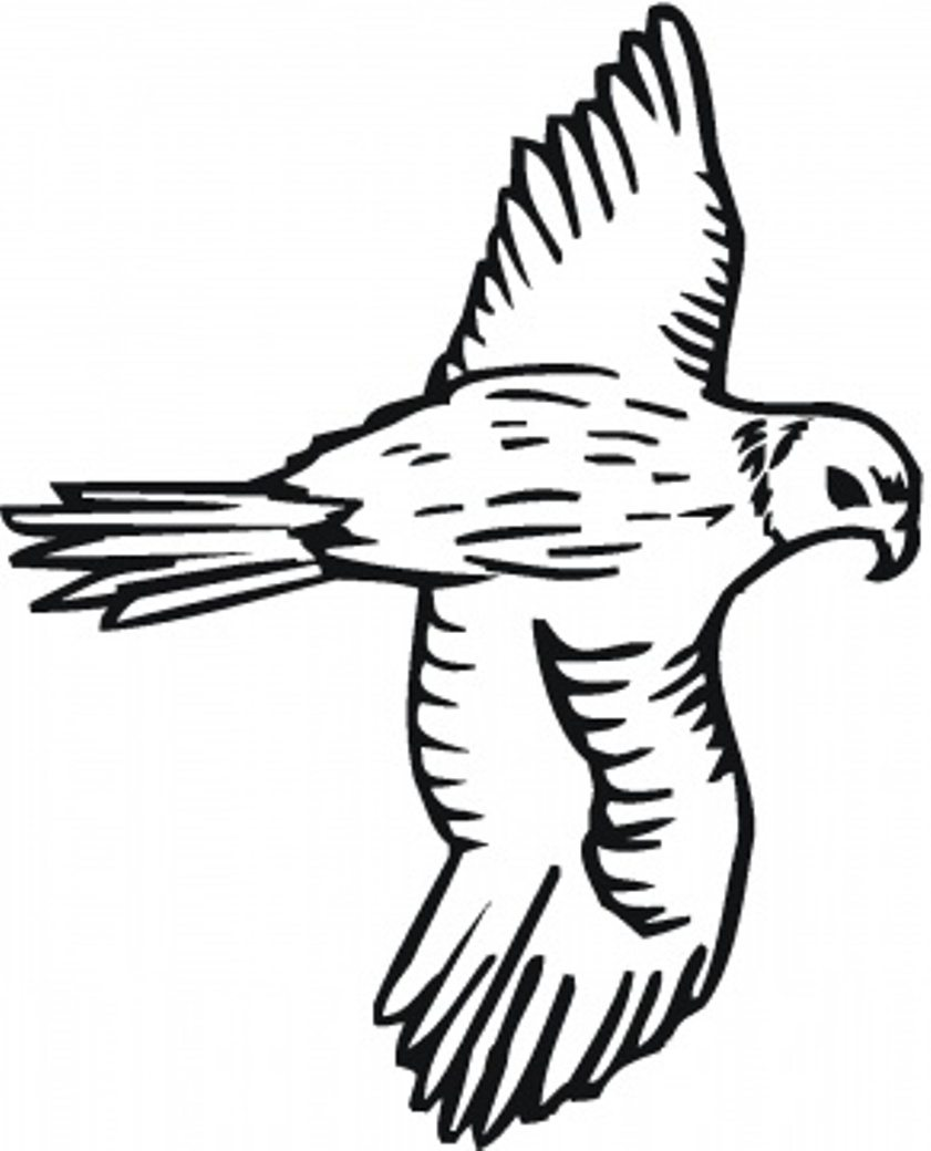 841x1040 bird coloring pages free falcon animal coloring pages of