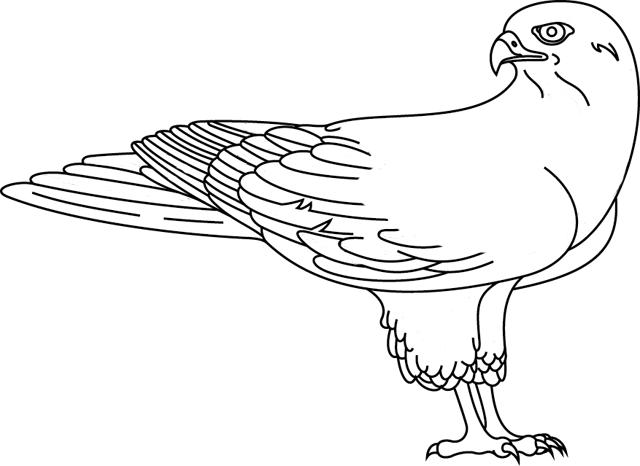 640x466 Falcon
