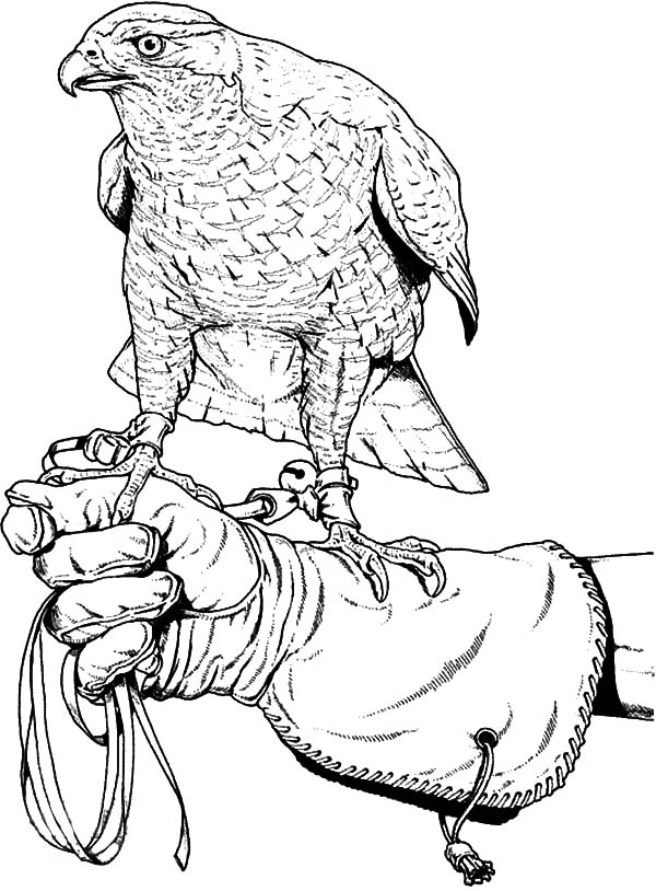 600x814 Falcon Bird Netart