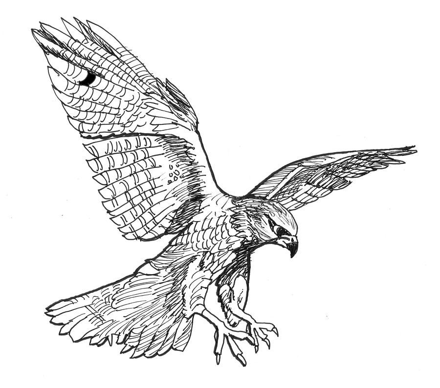 900x795 Falcon Drawing By David Burkart