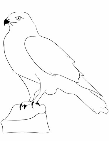 371x480 Falcon Outline Coloring Page Free Printable Coloring Pages