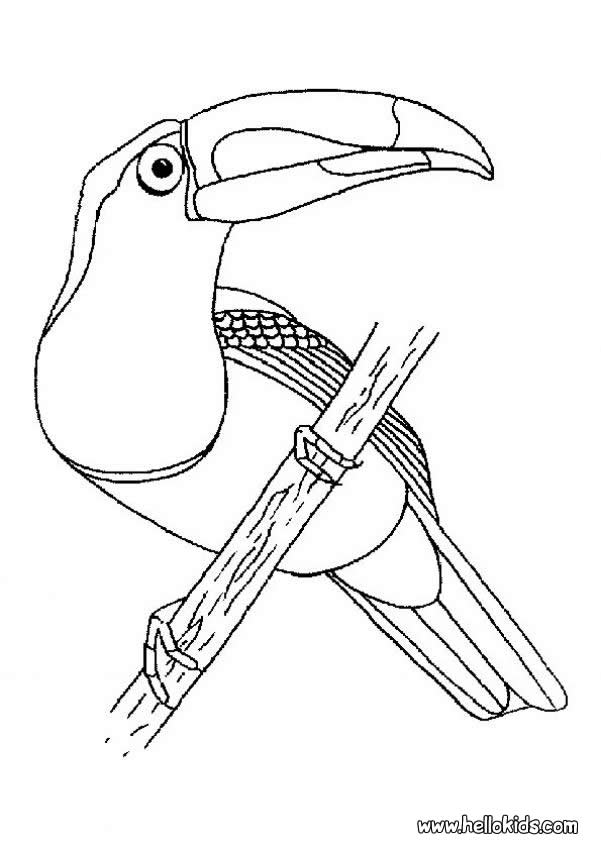 601x850 Falcon Coloring Pages