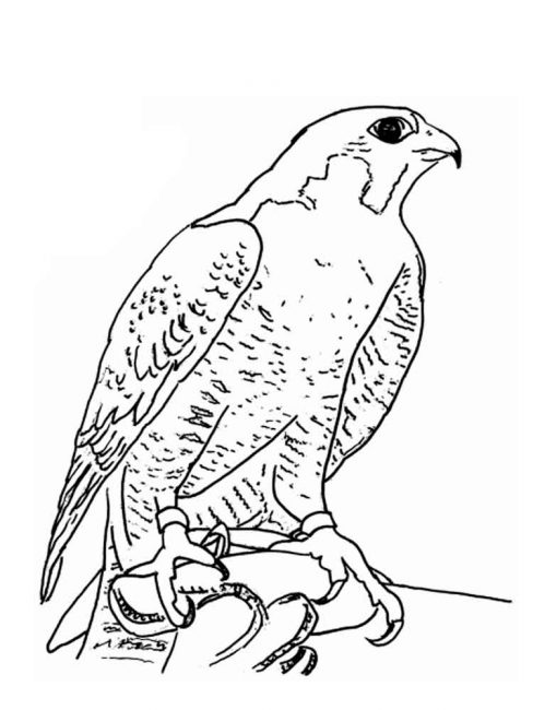 488x650 Falcon Coloring Pages F6 Nice Coloring Pages For Kids