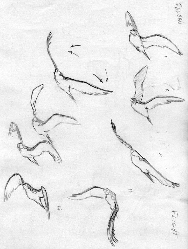 642x850 Falcon Studies Pablo Navarro Animation Blog