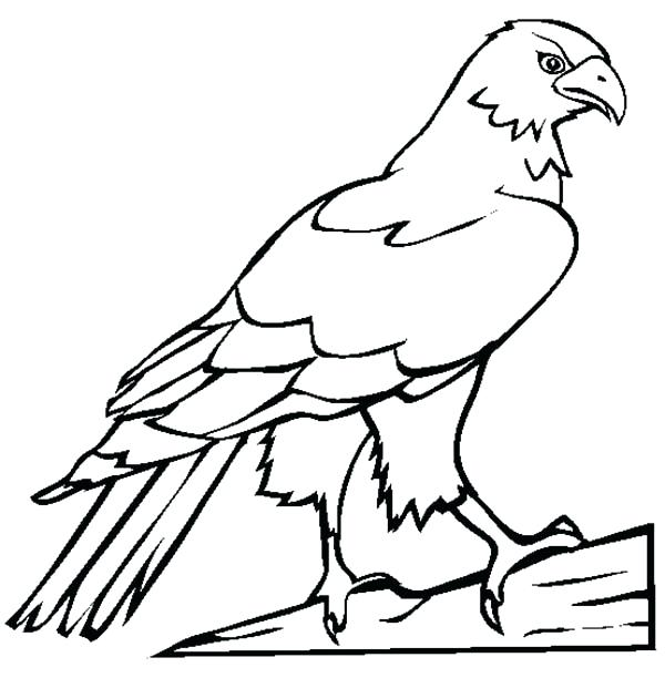 600x612 falcon animal coloring pages affan