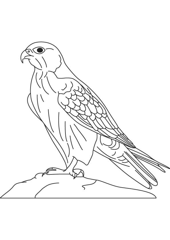 595x842 Coloring Pages Draw A Falcon
