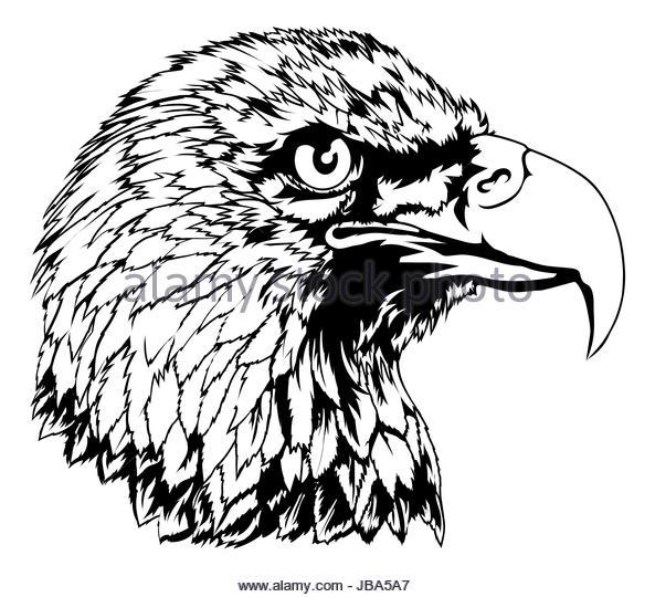 593x540 Falcon Clip Art Stock Photos Amp Falcon Clip Art Stock Images