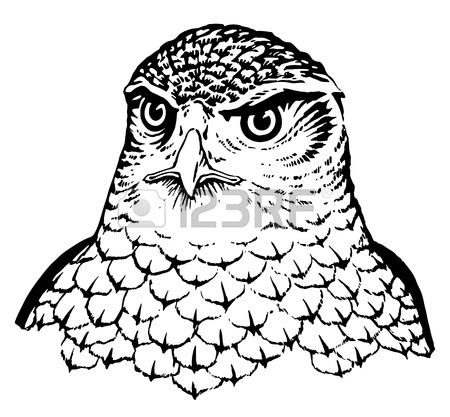 450x417 Falcon Royalty Free Cliparts, Vectors, And Stock Illustration