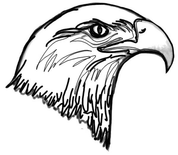 600x524 Picture Of Bald Eagle Head Coloring Page