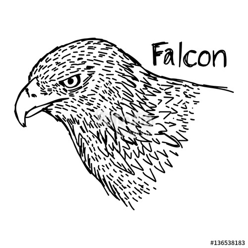 500x500 Vector Illustration Sketch Hand Drawn With Black Lines Of Falcon'S