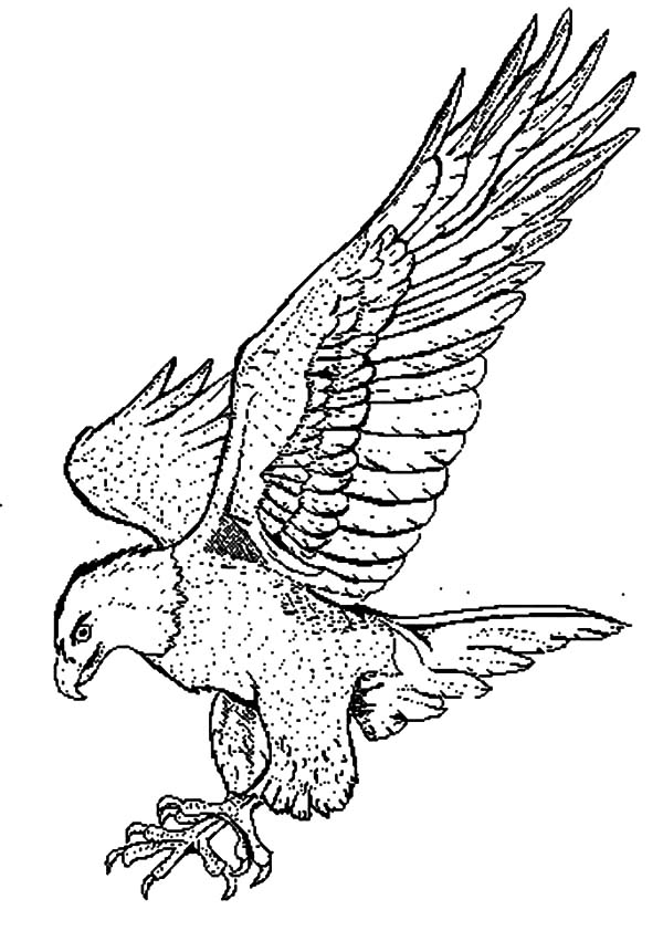 600x842 Coloring Pages Draw A Falcon Falcon Bird Powerful Claws Coloring