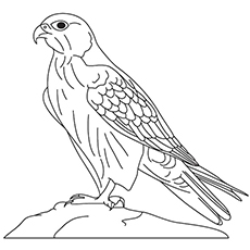 Falcon Line Drawing