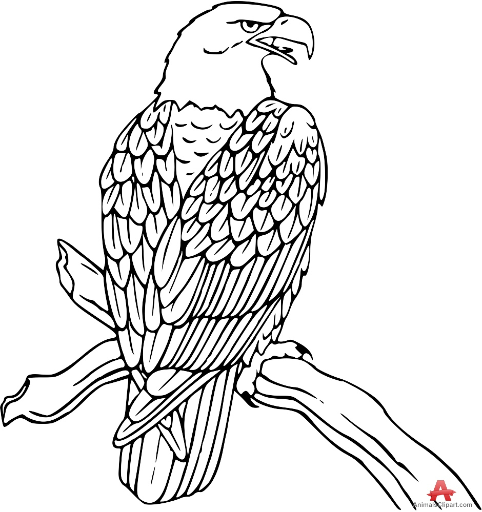 Line Drawing Eagle : Falcon line drawing at getdrawings free for personal