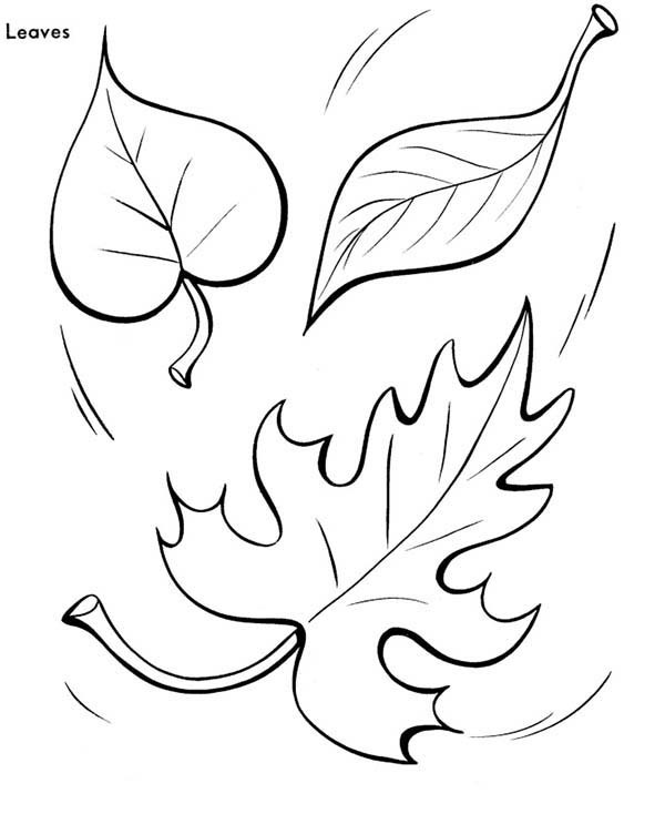 600x734 Falling Leaves Coloring Pages