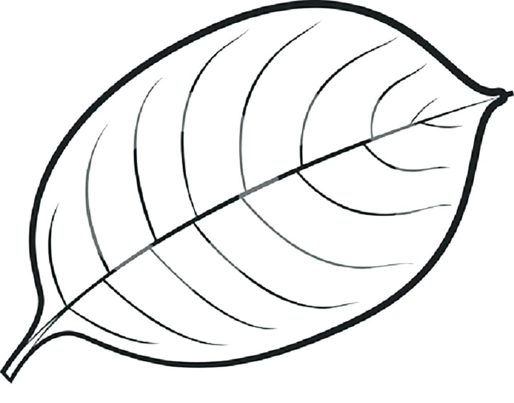 1000x783 coloring page leaf leaves coloring pages printable pin mango - Coloring Pages Of Leaves