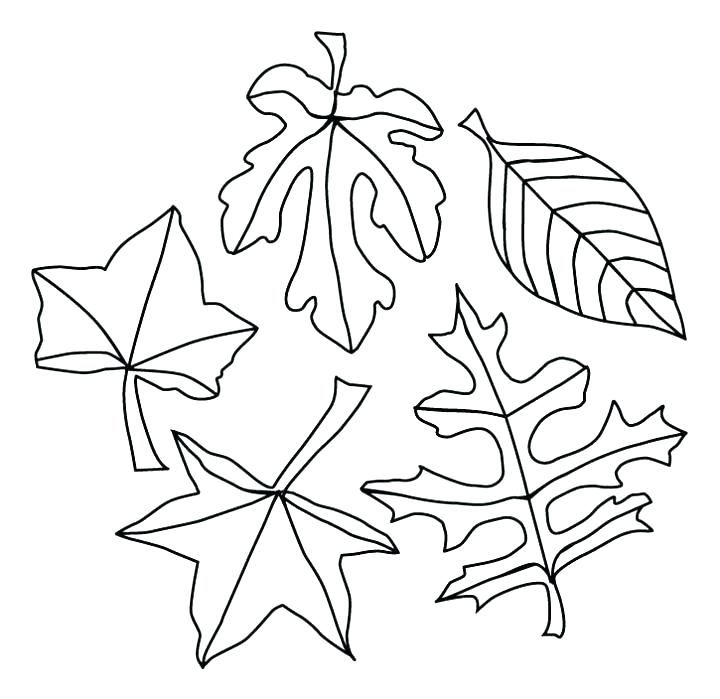 720x699 Coloring Pages Fall Leaves Page Preschool