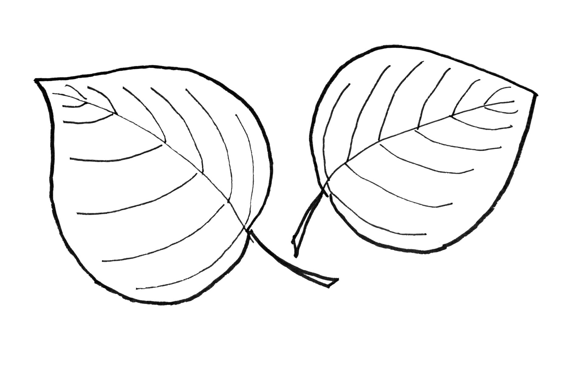 1855x1205 Aspen Leaf Drawing