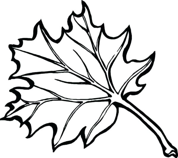 600x531 Autumn Leaves Coloring Pages Autumn Leaves In Autumn Coloring Page