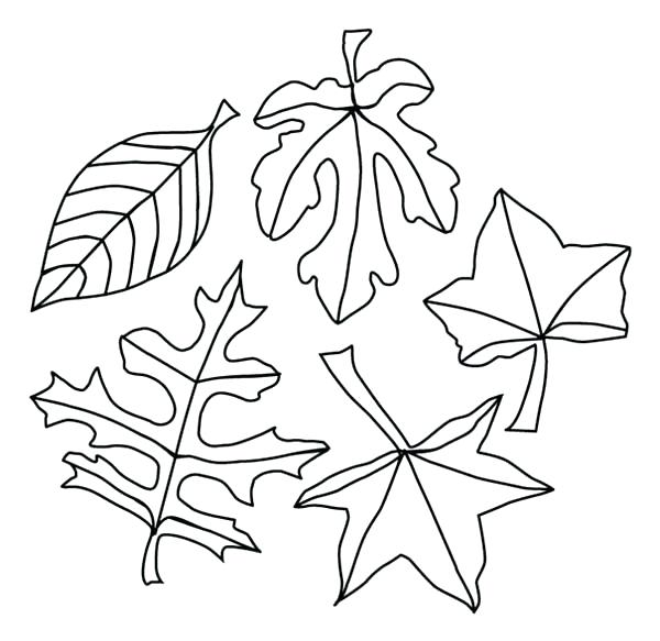 600x583 Coloring Pages Fall Season Fall Season Leaves Coloring Pages Free