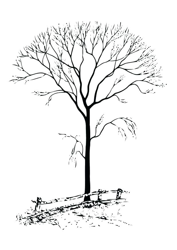 618x872 Tree Without Leaves Coloring Page Tree Without Leaves Of Bare Tree