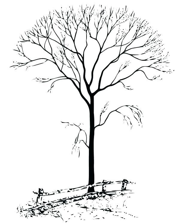 618x749 Fall Tree Coloring Sheet Convobox.co