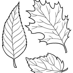 Falling Leaf Drawing At Getdrawings Com Free For Personal Use