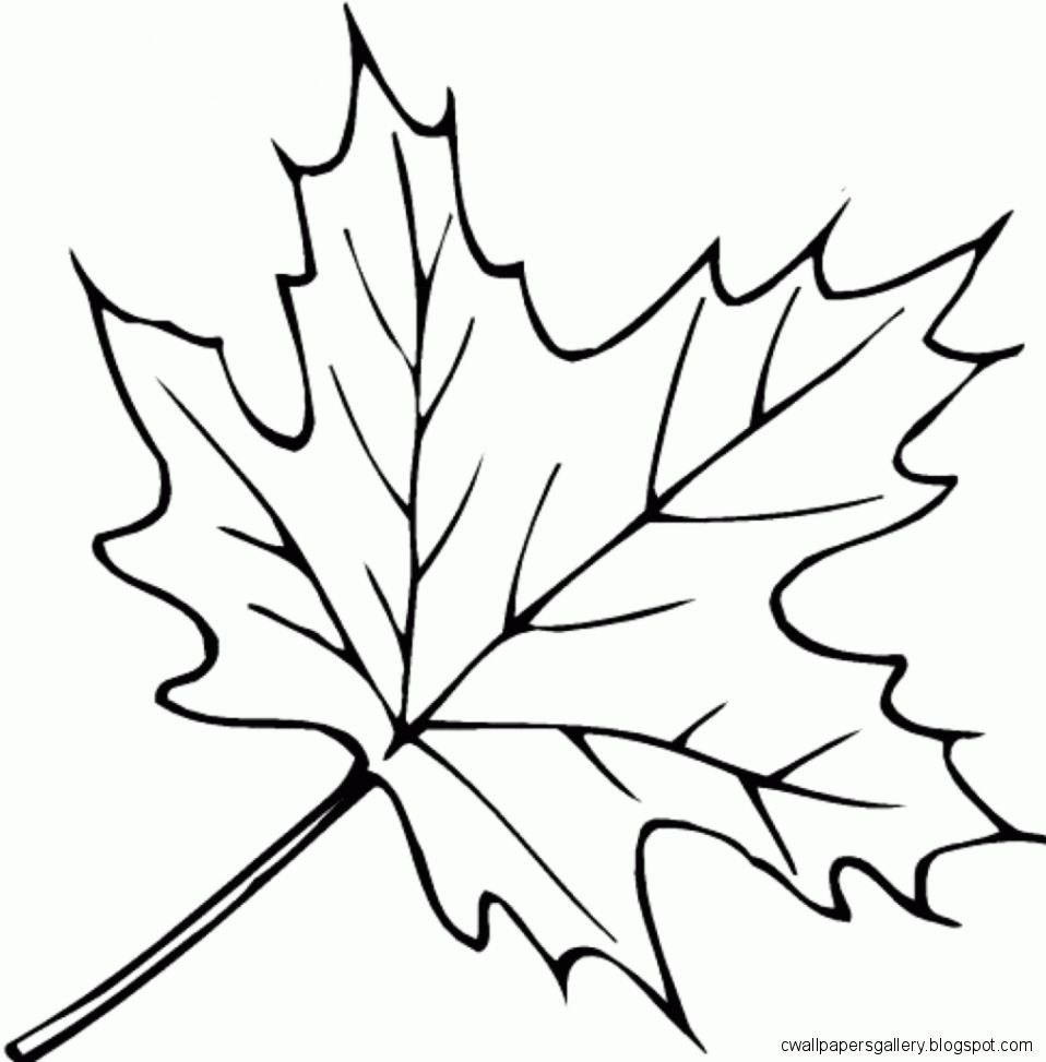 958x973 Autumn Leaves Drawing Wallpapers Gallery