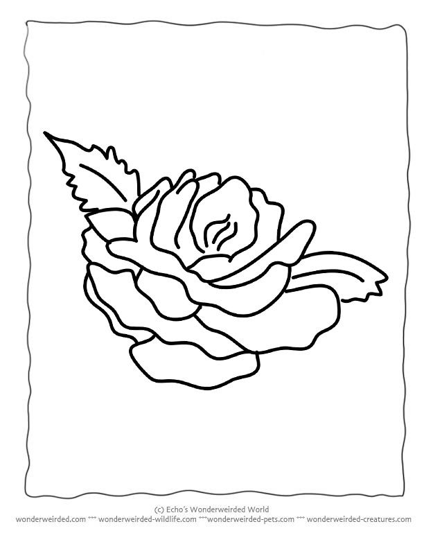 612x792 Flower Coloring Sheets Rose Wonderweirded Free