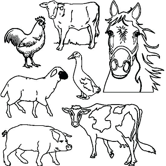 550x550 Coloring Animals Animals Drawing To Print Farm Animals To Color