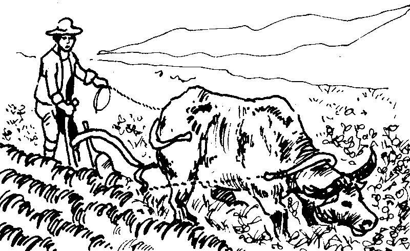 800x489 Farm Fields Clipart Black And White