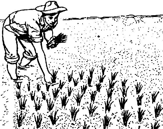 559x441 Low External Input Rice Production (Lirp) A Technology