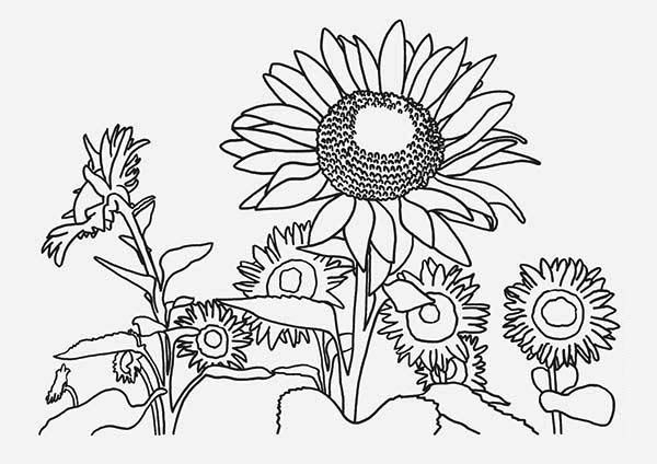 coloring pages of fields | Farm Field Drawing at GetDrawings.com | Free for personal ...