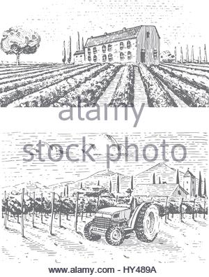 300x396 Farm, Agriculture Or Vineyards Sketch. Vector Illustration Stock