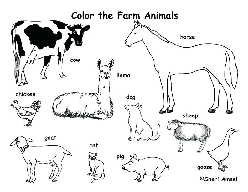 Image of: Chicken 792x612 Farm Coloring Pages Ideal Farm Animals Coloring Pages Printable Getdrawingscom The Best Free Farm Drawing Images Download From 50 Free Drawings Of