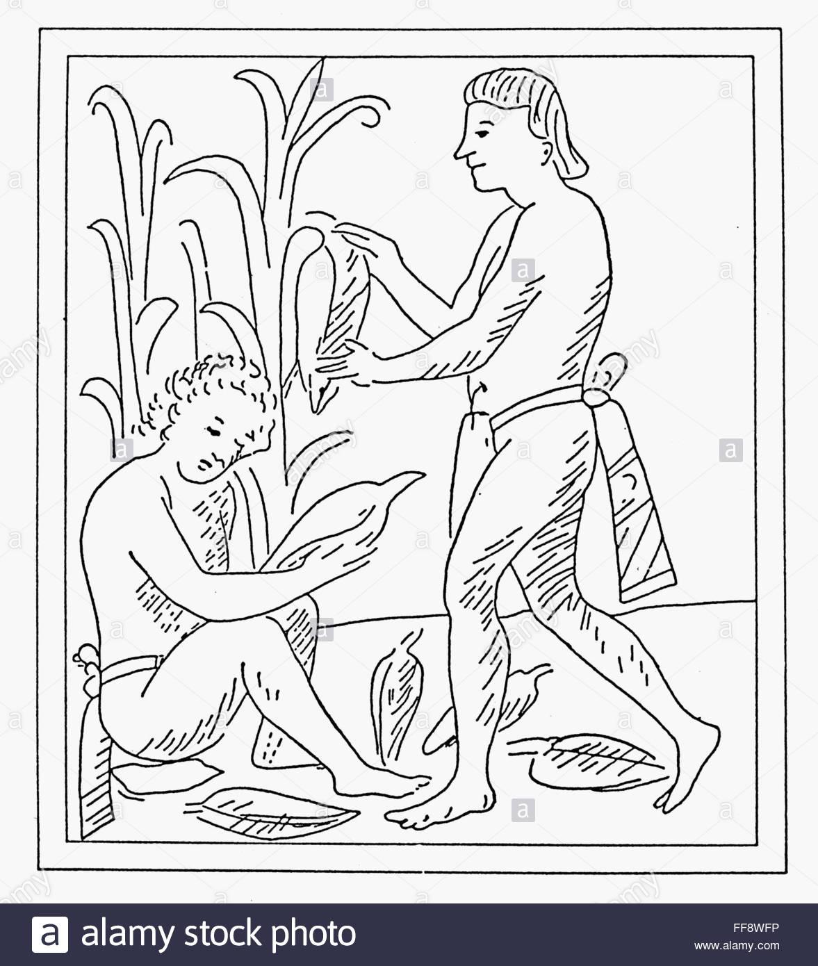 1177x1390 Aztec Farmers. Naztec Farmers Harvesting The Corn Crop. Line